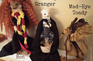 Harry Potter Taxidermied Creatures