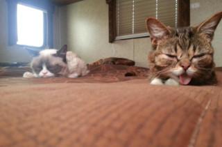 Lil Bub Meets Grumpy Cat