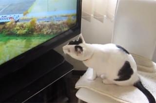 Tama the Cat's Favorite TV Show