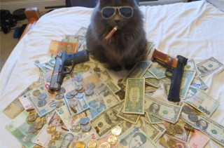 Caption This: Cash Cat (Win Stuff)