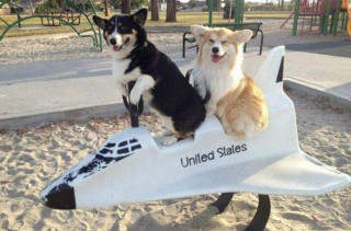 Caption This: Rocket Dogs (Win Stuff)