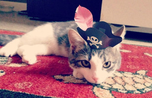 Cute 3-Legged Kitten Wearing Paper Hats