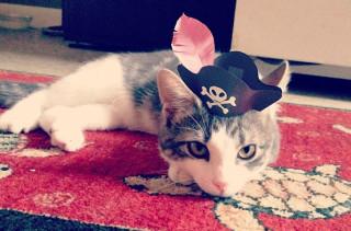 Cute 3-Legged Kitten Wearing Paper Hats
