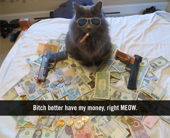 caption-this-cat-winner