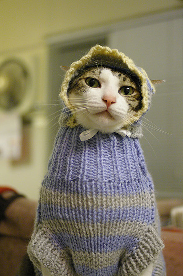 Cats In Sweaters Incredible Things