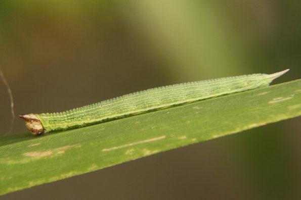 hello-kitty-face-caterpillar-5