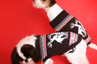Doggy Style Reindeer Christmas Sweater