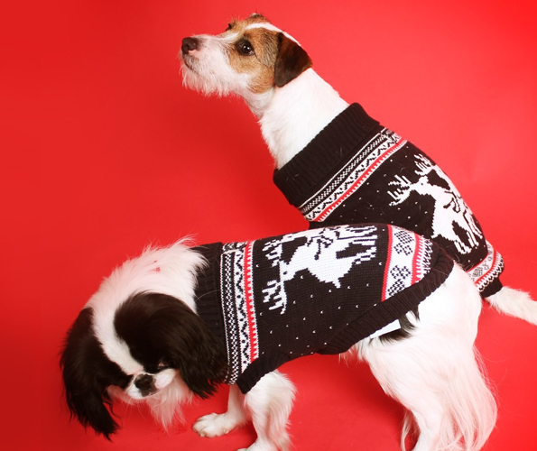 Doggy Style Reindeer Christmas Sweater | Incredible Things