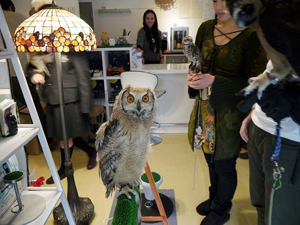 Owl-Cafe-4