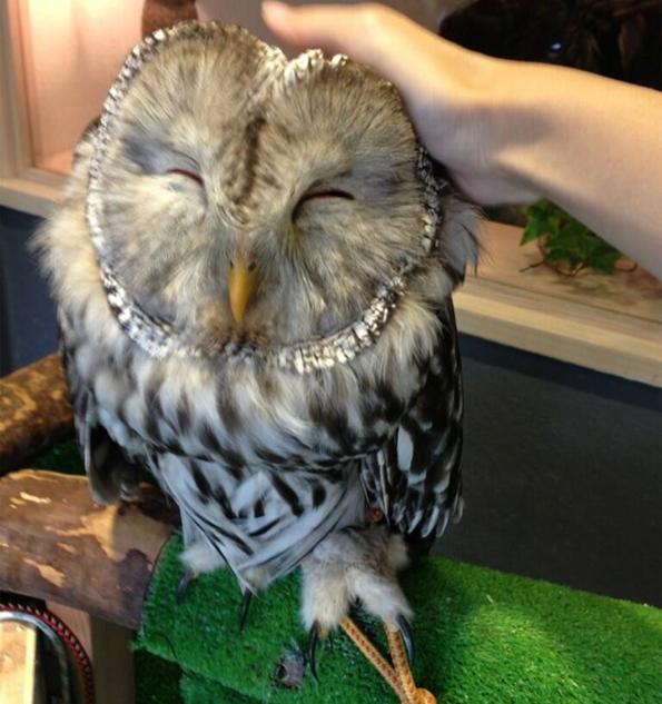 Owl-Cafe-5