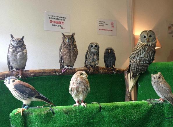 Owl-Cafe-6