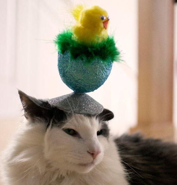 cat-hats-notsokitty-10