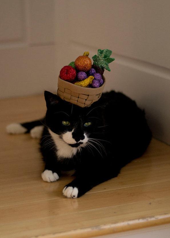 cat-hats-notsokitty-3