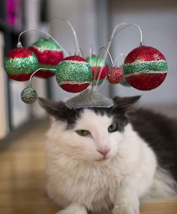 cat-hats-notsokitty-4