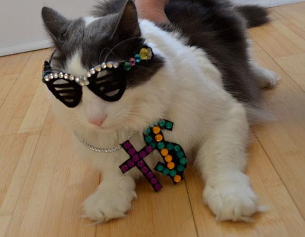 cat-hats-notsokitty-6