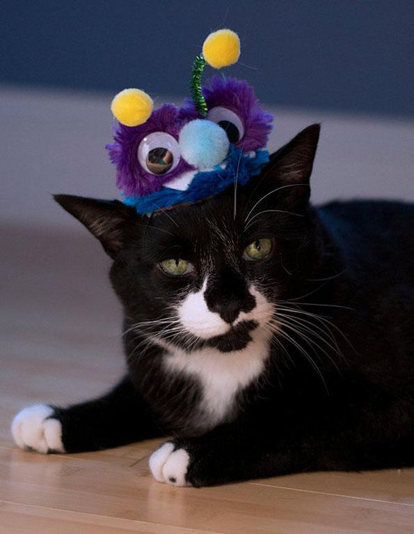 cat-hats-notsokitty-7