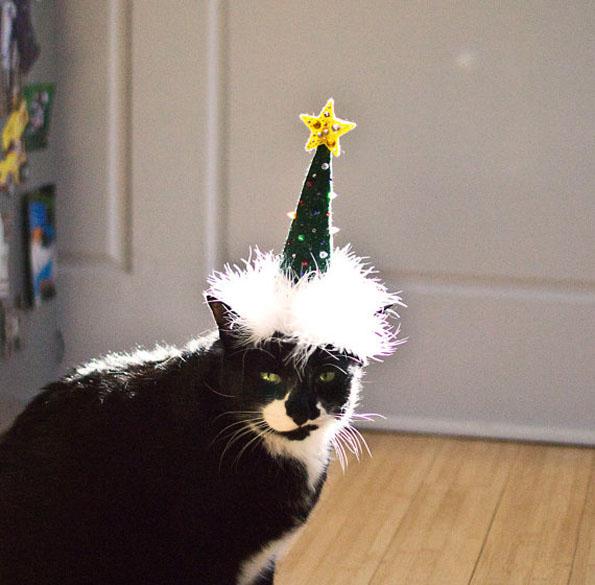 cat-hats-notsokitty-8
