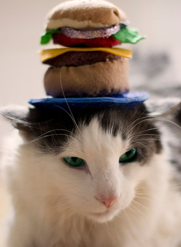 cat-hats-notsokitty-9