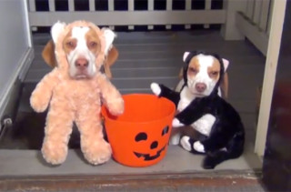 Adorable Doggies Go Trick or Treating