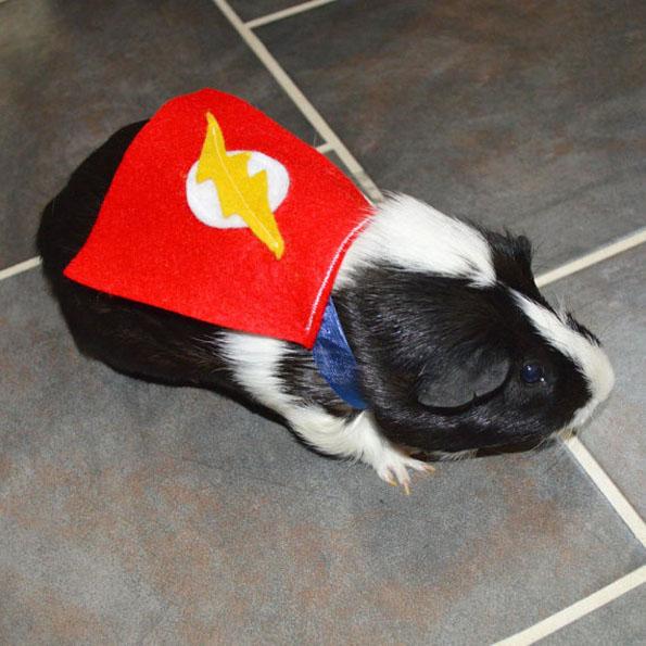 guinea-pig-costumes-10