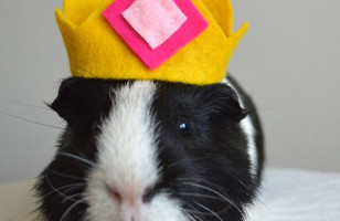 Guinea Pig Halloween Costumes