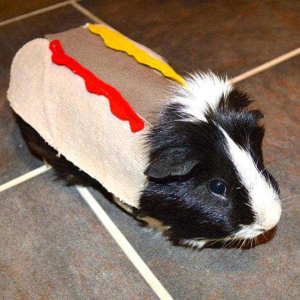 guinea-pig-costumes-4