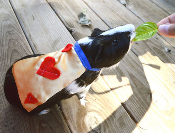 guinea-pig-costumes-5