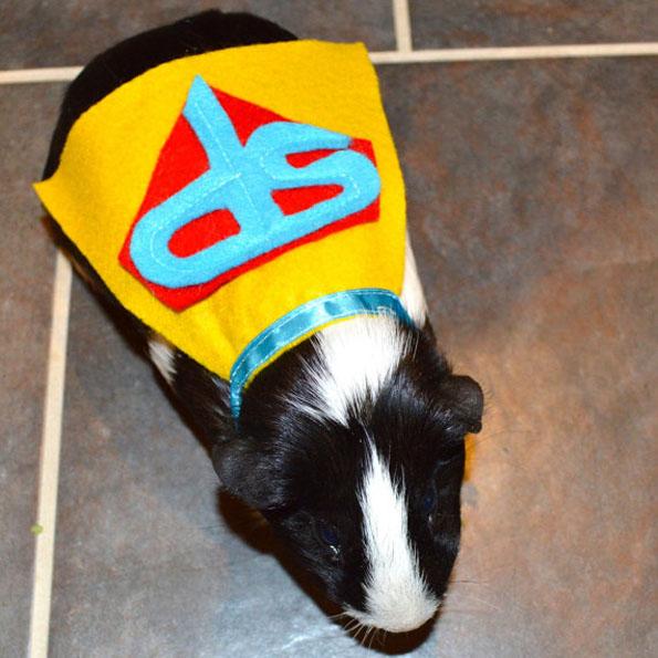 guinea-pig-costumes-6