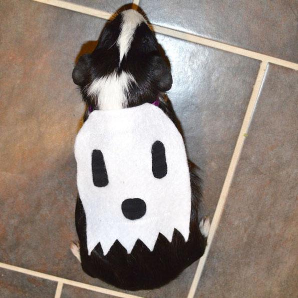 guinea-pig-costumes-7