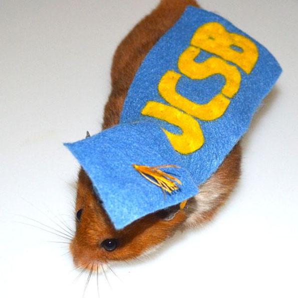 guinea-pig-costumes-8