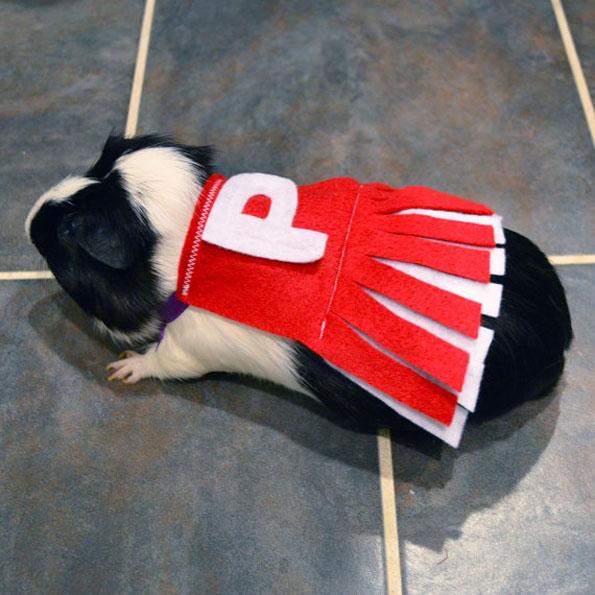 guinea-pig-costumes-9