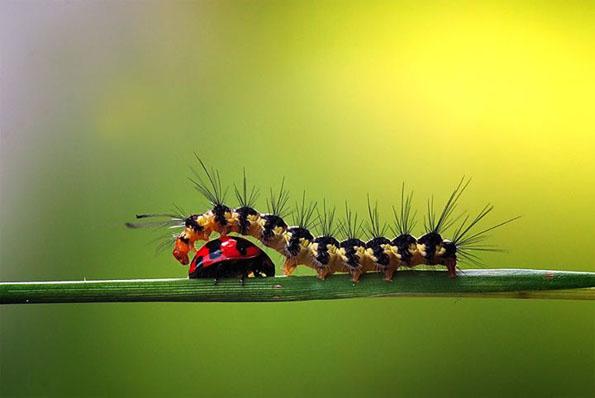 insect-bff-nordin-seruyan-1