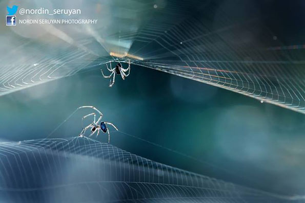 insect-bff-nordin-seruyan-11