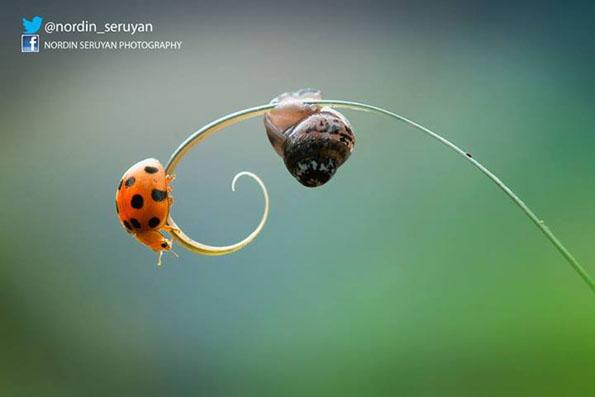 insect-bff-nordin-seruyan-12