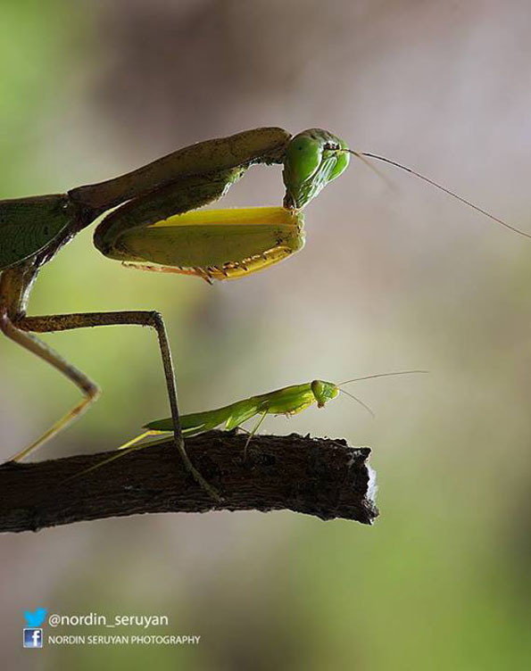insect-bff-nordin-seruyan-15