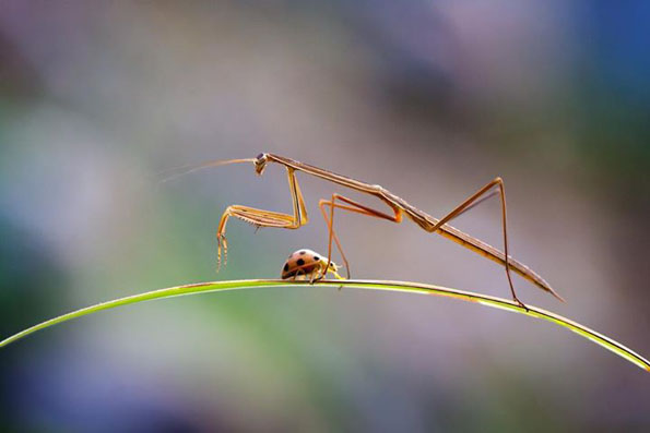 insect-bff-nordin-seruyan-2