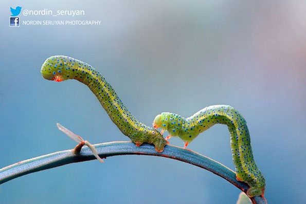 insect-bff-nordin-seruyan-5
