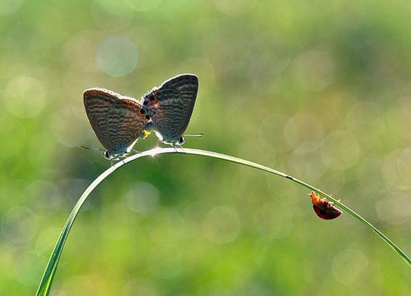 insect-bff-nordin-seruyan-7