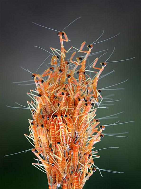 insect-bff-nordin-seruyan-9