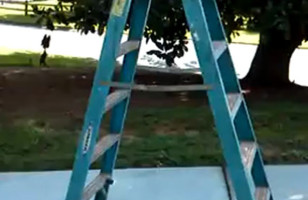 Walking Ladder Will Blow Your Mind