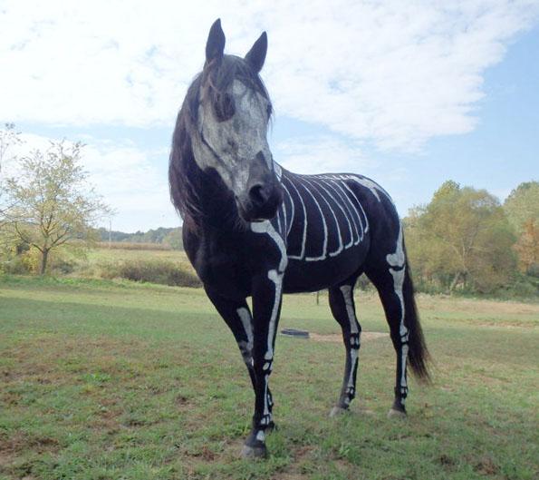 skeleton-horse-2