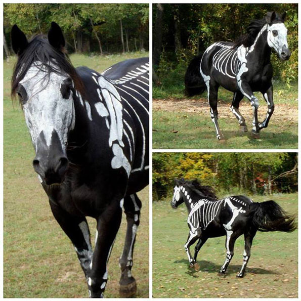 skeleton-horse-3