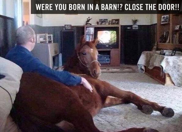 caption-this-horse-winner