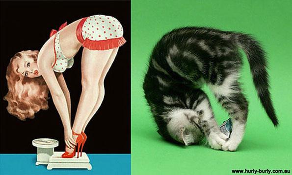cats-pin-ups-6