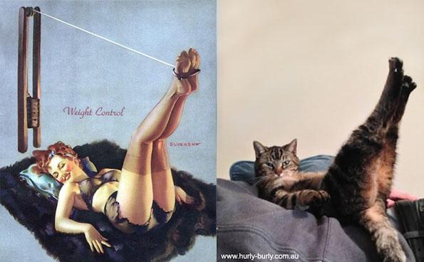 cats-pin-ups-7