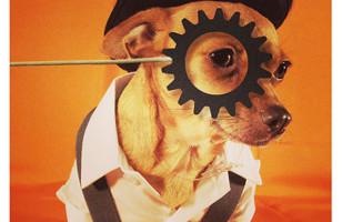Hilarious, Unique Dog Costumes