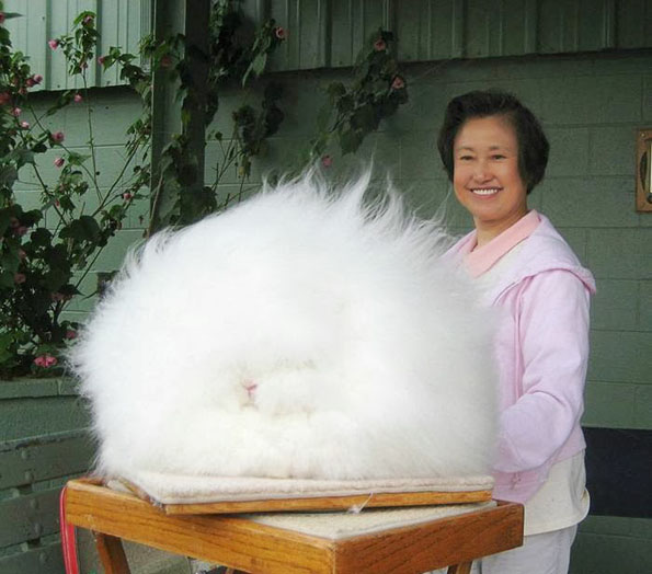 11-worlds-fluffiest-bunny