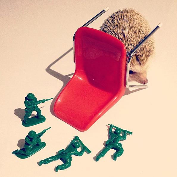 Darcy-the-Flying-Hedgehog-2