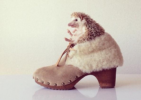 Darcy-the-Flying-Hedgehog-3
