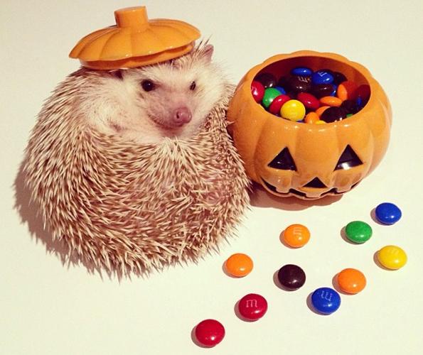 Darcy-the-Flying-Hedgehog-4
